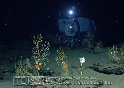 Underwater Alvin 2
