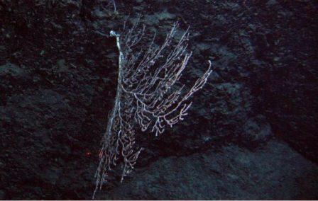 Keratoisidinae 2